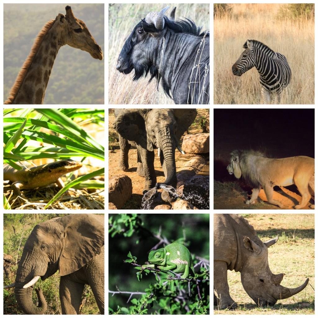 Pilanesburg Safari